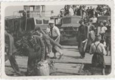 [Akcja siewna w Olsztynie w 1946 r. 1]